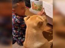 Niño le enseña a leer a su perro